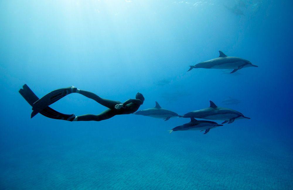 Фридайвер и дельфины