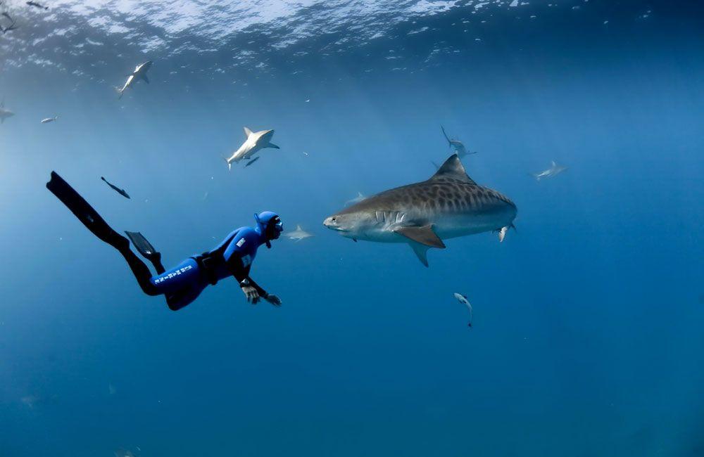 Плавание фридайвера