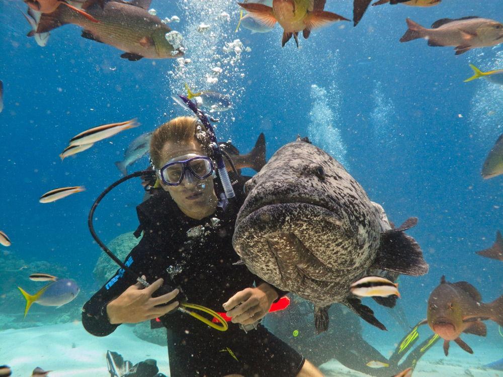 Дайвер с рыбами под водой