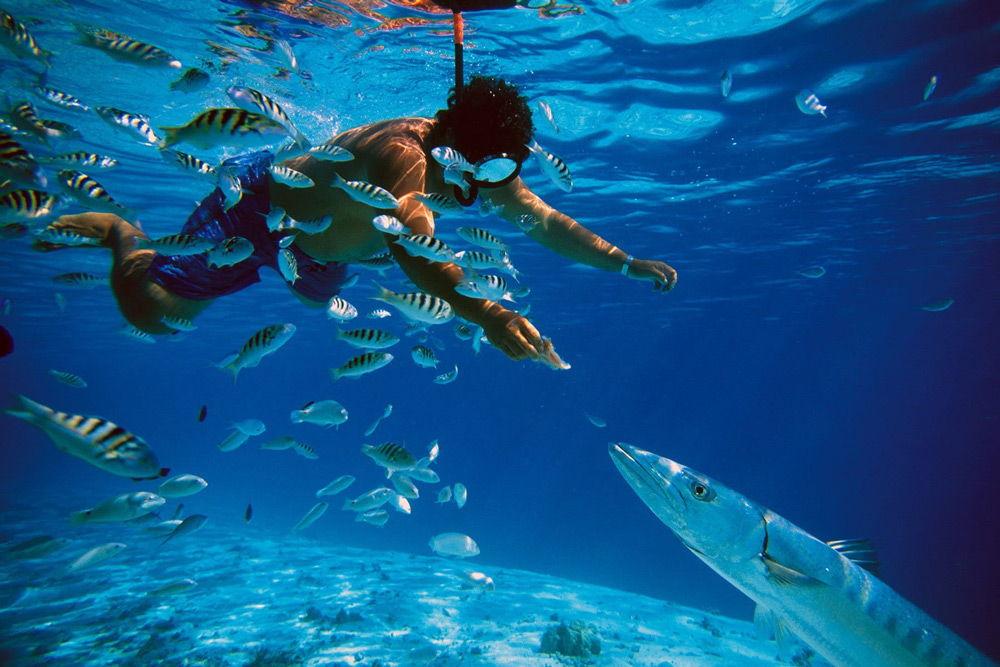 Мужчина под водой кормит большую рыбу