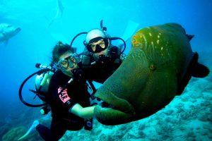 Скуба-дайвинг — это нечто большее, чем ныряние с аквалангом