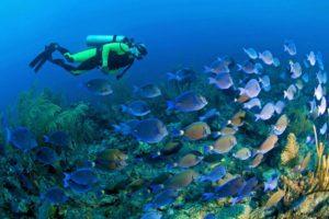 Выбираем снаряжение для подводного плавания