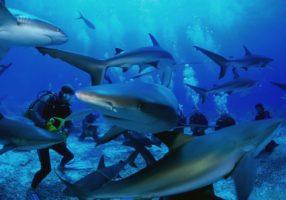 Дайверы и акулы