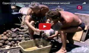 Одиссея команды Кусто - сокровища морей